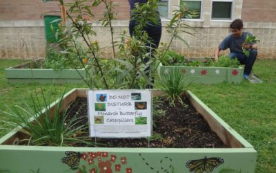 What We've Learned: Planting EcoRise Schools in a Green Future