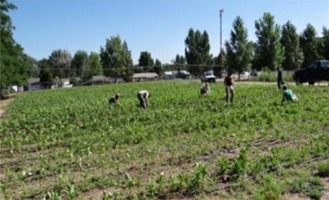 Denver Public Schools Farm to School Program: School Farms Feed District Students