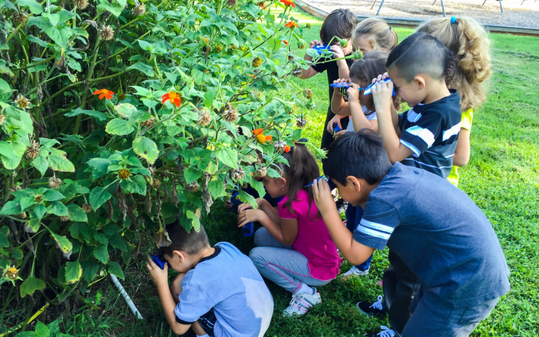 Study of Monarch Butterflies Inspires Life Changing Experiences for Students