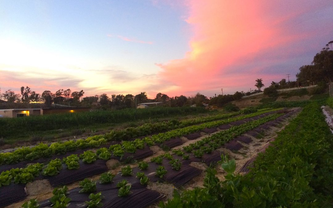 Encinitas DREAMS Bigger by Growing Their Own Certified-Organic Lunch!