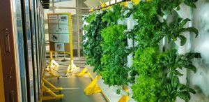Tower Gardens at Discovery Elementary School