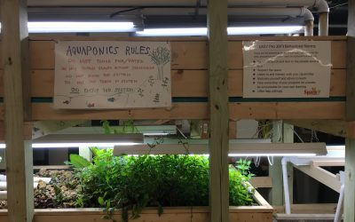 Planting the Seeds of a Sustainable Future at Spark-Y
