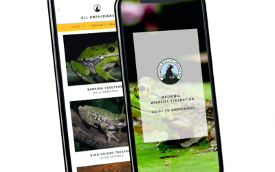 National Wildlife Federation Nature Guide Apps