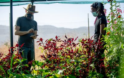 Staying Rooted: MUSE School Students Make Connections Between Soil and Food During Remote Learning