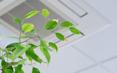 GSNN's Guide to Indoor Air Quality (IAQ)